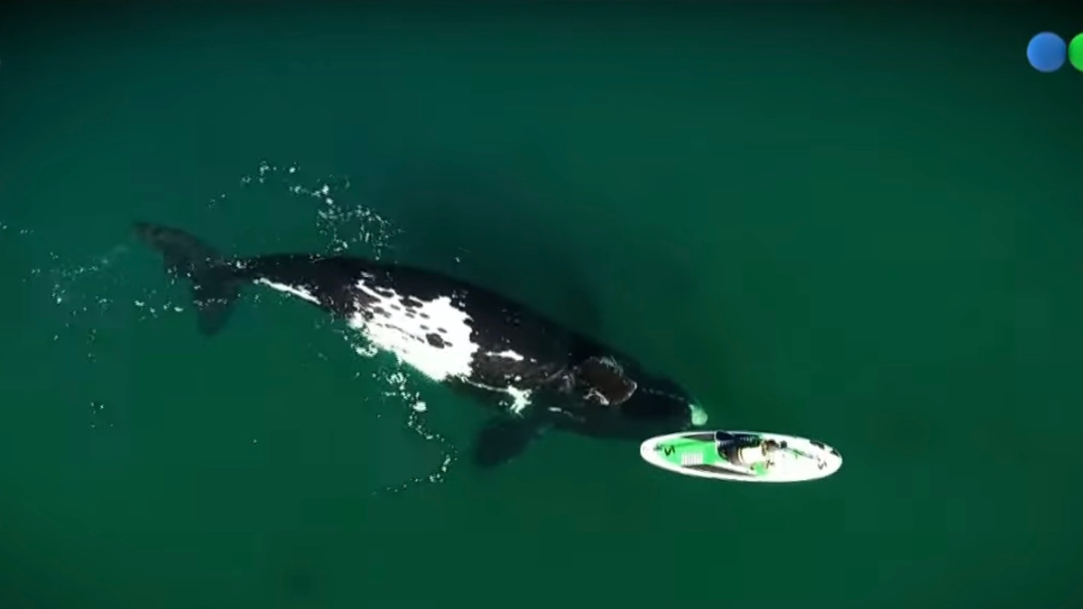 drone video whale