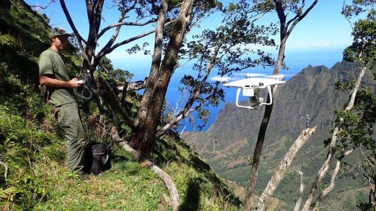 Kaua'i drone endangered plant