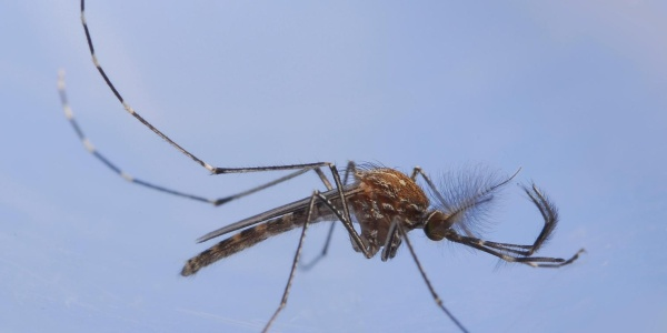 drone mission mosquito
