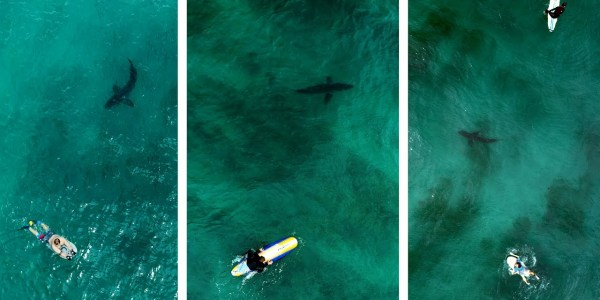 shark drone video san diego