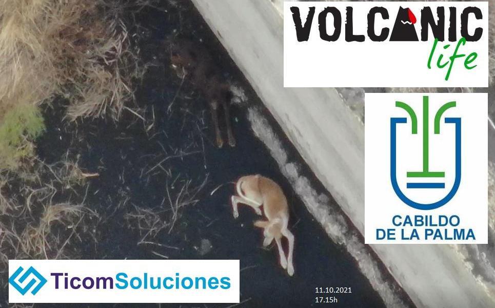 volcano lava drone animals