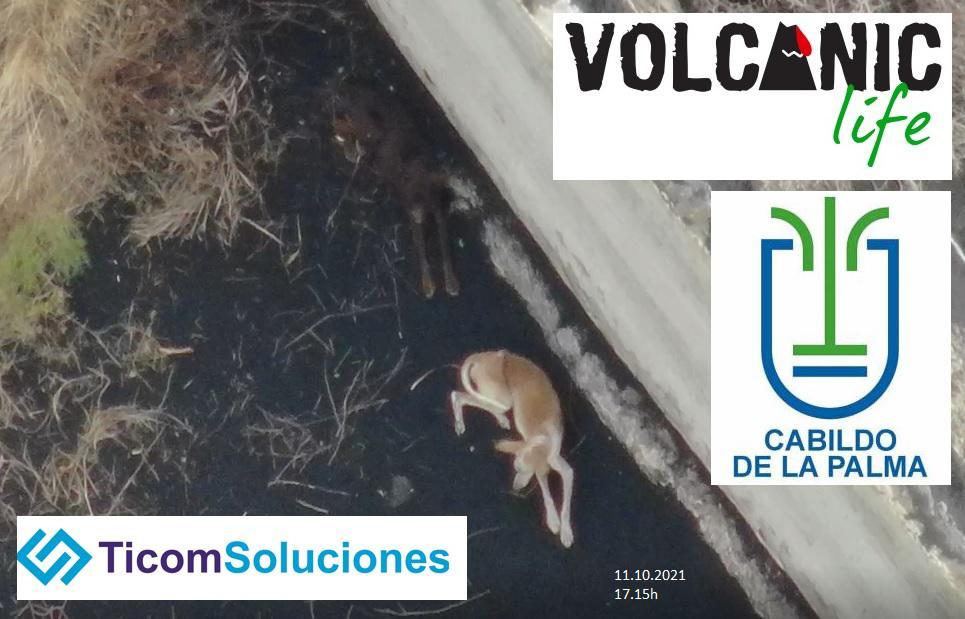 dogs drone volcano lava