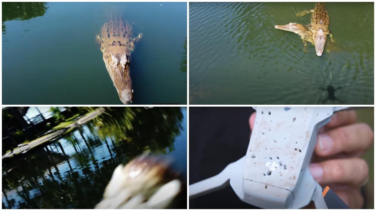 croc drone video