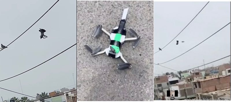 drone video pigeon